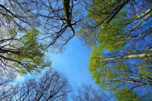 見上げた空は青い